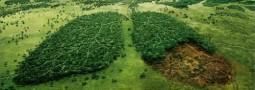 El lado creativo de la sostenibilidad